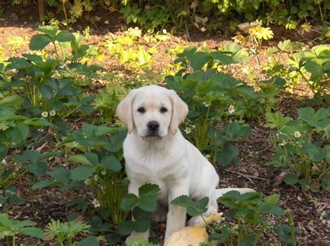How Can I Keep Dogs Out Of My Flower Beds?  Garden Guides