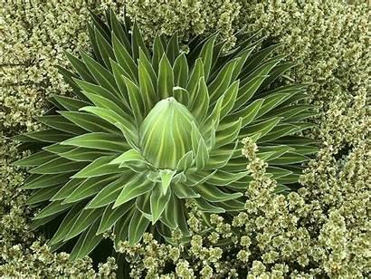 Plants Fabulous Wallpapers Adssss