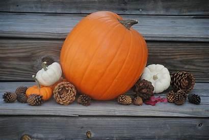 Pumpkin Desktop Backgrounds Thanksgiving Screensavers Wallpapers Storing