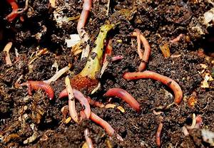 Vermicomposting – Composting with Earthworms