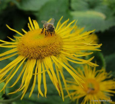 Botanischer Garten München Bienen by Around The World August 2011