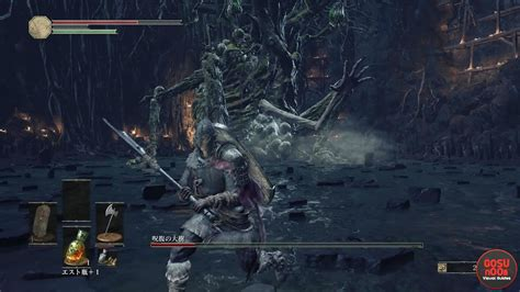 curse rotted greatwood boss dark souls