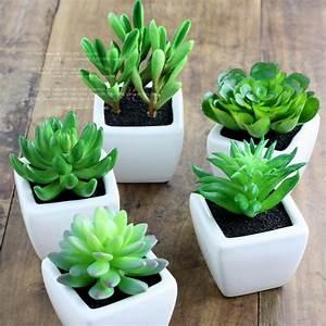 室内适合养什么花草 常见室内盆栽植物大全-365地产家居网