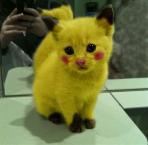 boneka pikachu s the gallery for gt black cats with yellow breed