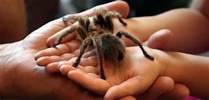 Se Débarrasser Des Araignées : comment se d barrasser des araign es autour de la france ~ Louise-bijoux.com Idées de Décoration