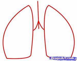 How To Draw Lungs  Step By Step  Anatomy  People  Free