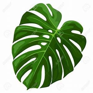 Tropical Leaf Clipart – 101 Clip Art