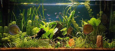 plante de cuisine les plantes d aquariums un monde fascinant jardins de