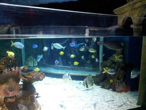 raie picture of aquarium sea val d europe marne la vallee tripadvisor