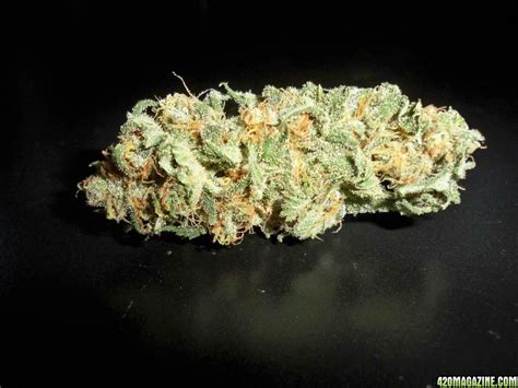northern lights strain delicious seeds northern light blue