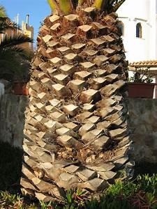 Diagram Palm Tree Trunk