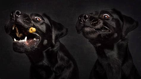 Dog Catching Treat Funny Pictures