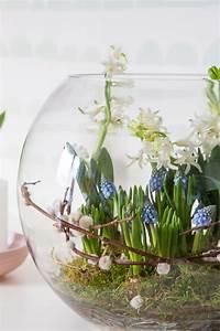 Tulpen Im Glas Ohne Erde : fr hlingserwachen mit blumenzwiebeln dekorieren ~ Frokenaadalensverden.com Haus und Dekorationen