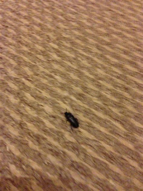 natureplus    finding  beetles