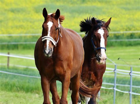 companion horses horse equinenow