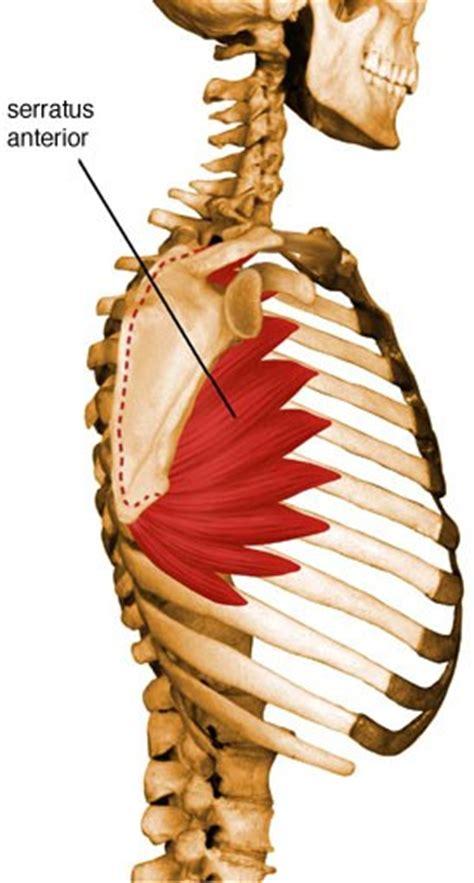 serratus anterior uw radiology