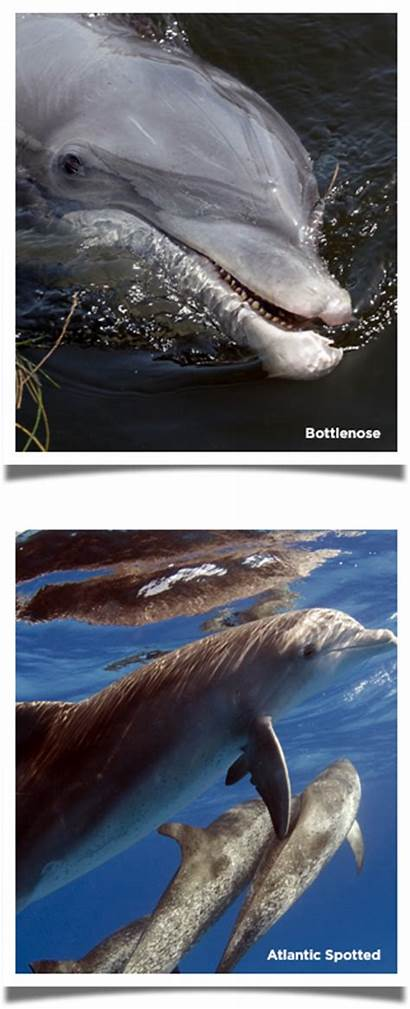 Dolphins Dolphin Sea Eco Trail Types Bottlenose