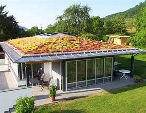 Extensive Dachbegrünung Aufbau : dachbegr nung oase im asphalt dschungel ~ Whattoseeinmadrid.com Haus und Dekorationen