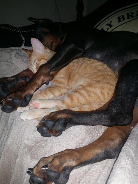 animales tan cansados  duermen en cualquier parte