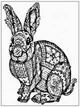 Coloring Pages Rabbit Adult Realistic Boys Printable Colouring sketch template
