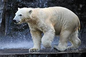 öffnungszeiten Zoo Rostock : zoo rostock erholung in graal m ritz ~ Eleganceandgraceweddings.com Haus und Dekorationen