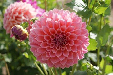 20 Puķes, kuras aug Latvijā - Spoki - bildes 2