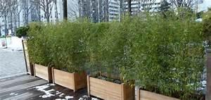Bambou En Pot Pour Terrasse : bambou balcon pivoine etc ~ Louise-bijoux.com Idées de Décoration