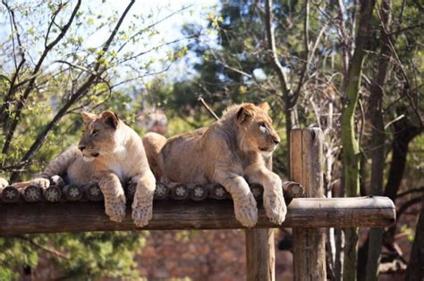 zoo johannesburg exhibits place source