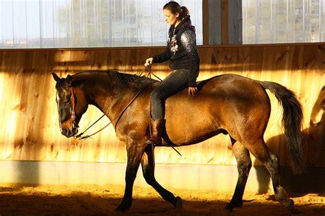 bareback riding wie reiten ohne sattel den sitz verbessert