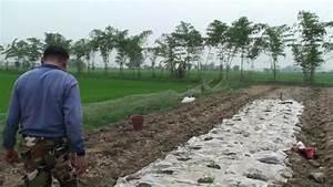 Azolla Duck Rice Farming@ แม่สาย เชียงราย5 - YouTube