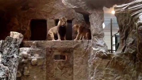 zoo lwy