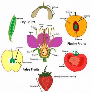 True Fruit Diagram