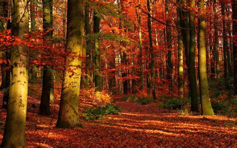 Fall Desktop Backgrounds Autumn Wallpaper by Autumn Forest Wallpaper For Desktop Pixelstalk Net