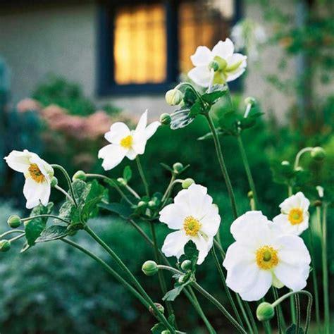 Die Schönsten Blumen Für Den Garten by Die Sch 246 Nsten Wei 223 En Blumen F 252 R Ihren Garten