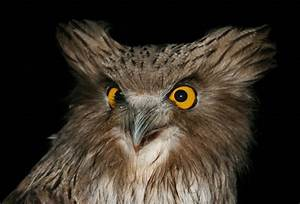 TMU | Unlikely Allies: Owls And Loggers
