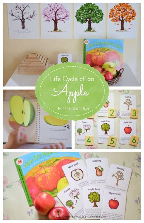 cycle of an apple preschool unit kindergarten 555 | dea4bf817902b1d0439e0bcc7a2a6343 fall preschool preschool ideas