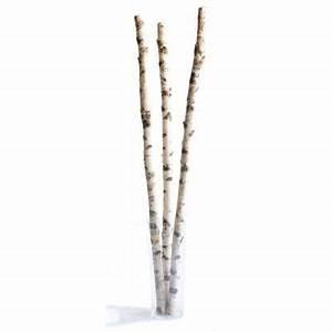 Achat Tronc Arbre Decoratif : troncs de bouleau aligner en rang e sur mur blanc effet ~ Zukunftsfamilie.com Idées de Décoration