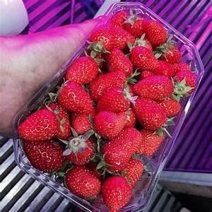 Faire Pousser Des Fraises : faire pousser fraise un container pour faire pousser des fraises au bas des immeubles comment ~ Melissatoandfro.com Idées de Décoration