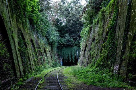 Tree, Nature, Railway, Railroad, Train Track, Tunnel, Transport, Green, Jungle