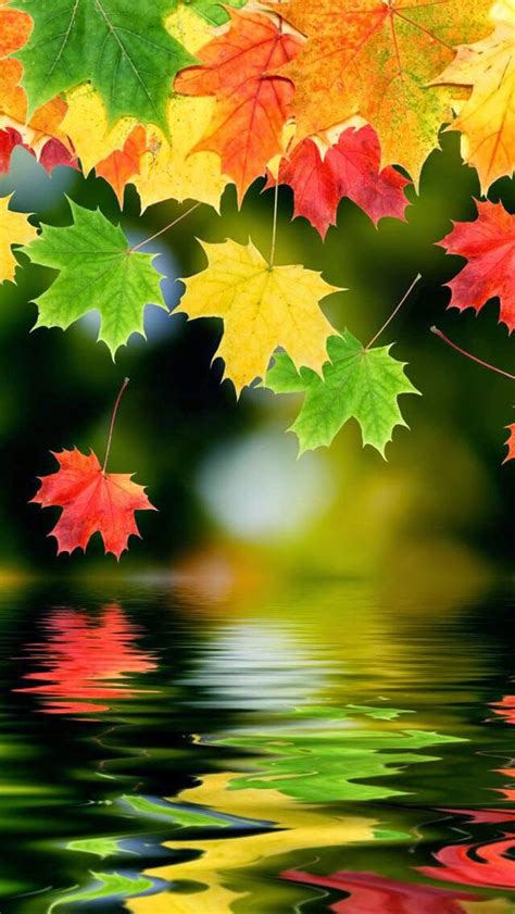 Beautiful Fall Leaves Iphone Wallpaper by Fall Leaves Hd Iphone Wallpaper Wallpapers 紅葉 風景 旅行参考