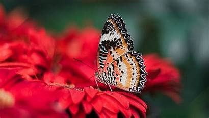 4k Butterfly Colorful Flower Wallpapers Hdnicewallpapers