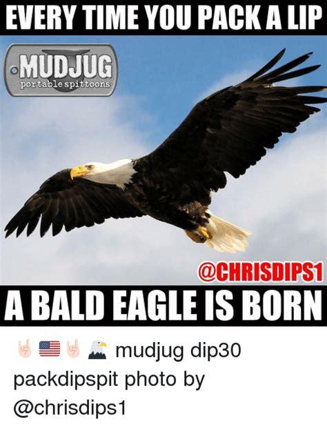 Eagle Memes - 25 best memes about bald eagles bald eagles memes
