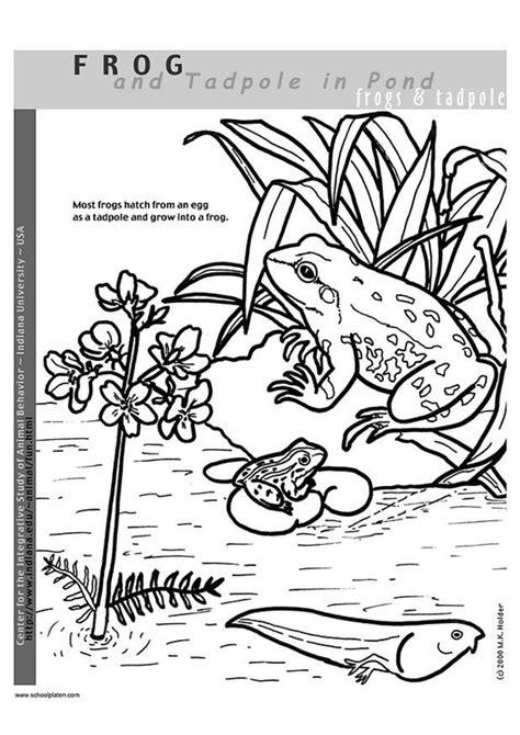 Kikkerdril Tot Kikker Kleurplaat by Kleurplaat Kikker Afb 2949