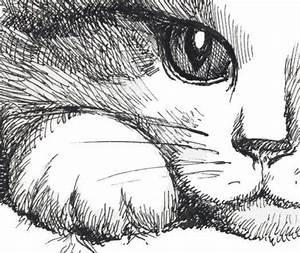 Pencil Sketch Of Lovers Space Cat Animal Art Cat Art Animal Drawings