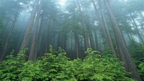 Forest Evergreen National Park Washington Wallpaper