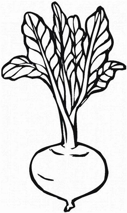 Coloring Vegetables Beetroot Pages Clipart Drawing Fruits