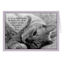 loss of a cat quotes cat sympathy quotes quotesgram