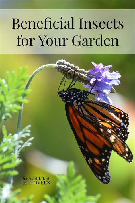 tips for attracting beneficial insects to your garden