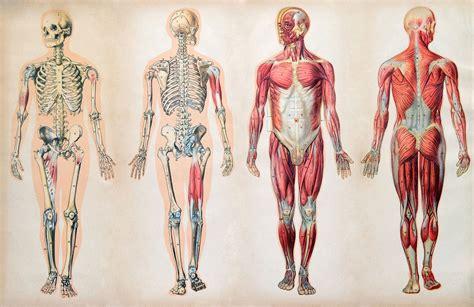 Below the identifying names is the diagram. Muscles Of The Human Body Diagram Worksheet - Aflam-Neeeak