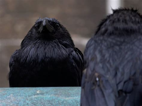 canon pg 240 file tower of ravens closeup jpg wikimedia commons